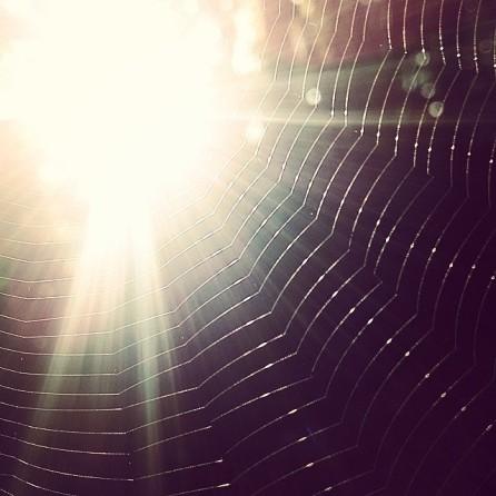 Cobweb we saw