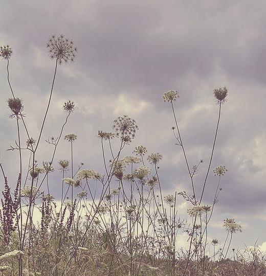 WildflowerAntslove